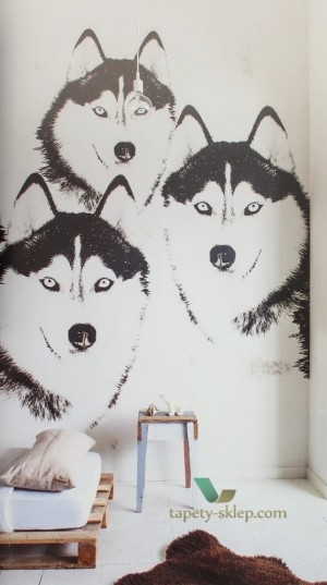 Fototapeta Husky OZ3170 Stoer for Boys
