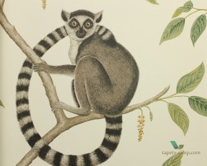 Tapeta Sanderson 216664 Ringtailed Lemur The Glasshouse