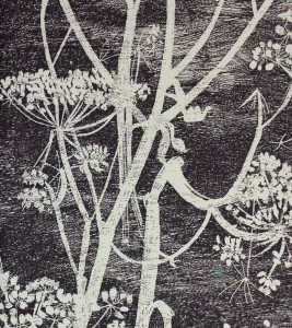 Tapeta Cole & Son 66/7046 Cow Parsley The Contemporary Selection